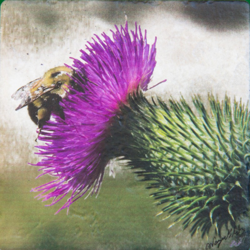 WGAThistle-Bee